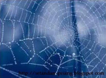 jaring laba2
