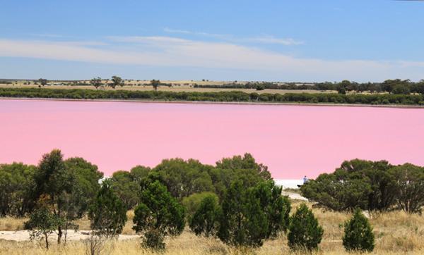 danau pink 1