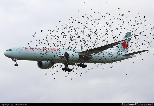 pesawat dikitari burung