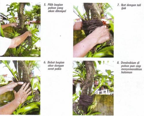 menempellan di pohon