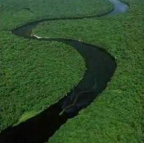 Gempar Ular Raksasa di Pedalaman Kalimantan
